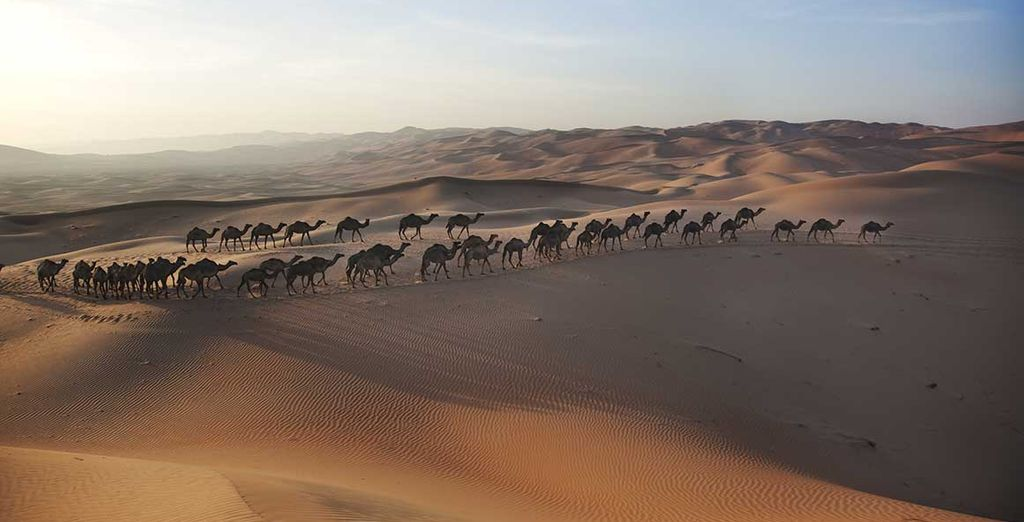 Partez explorer l'immensité du désert arabique