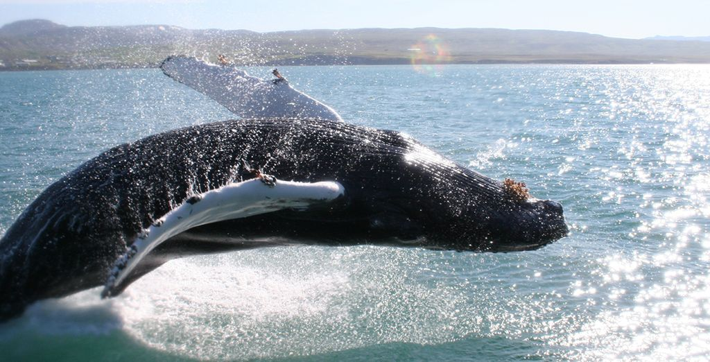 See some whales on an optional tour