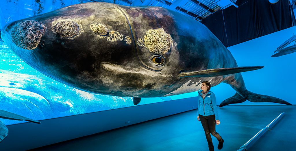 A visit to the new Whales of Iceland exhibition...