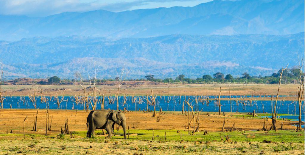 Entdecken Sie Sri Lanka in 9 oder 11 Nächten
