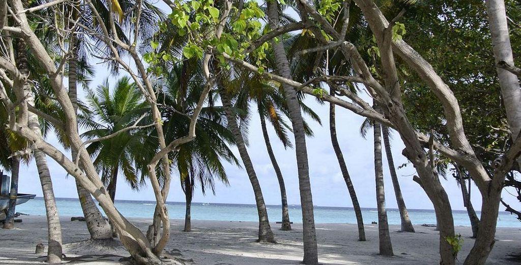 Palmen, weiße Strände...