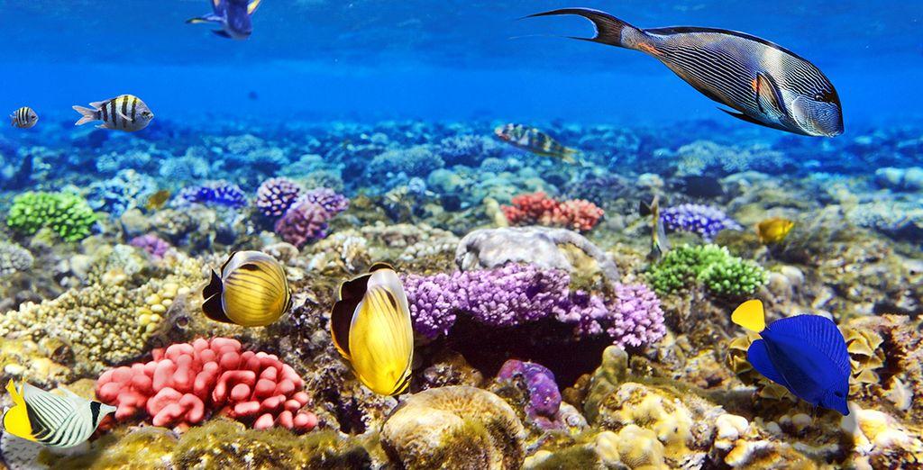 ... und eine einzigartige Unterwasserwelt warten auf Sie