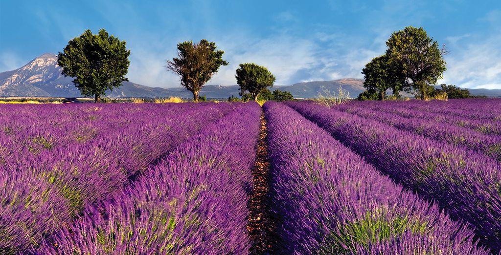 Wir wünschen Ihnen einen schönen Aufenthalt in der Provence!