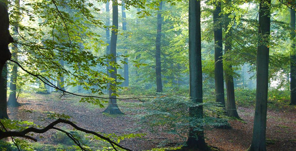 Spazieren Sie durch den Zonienwald...