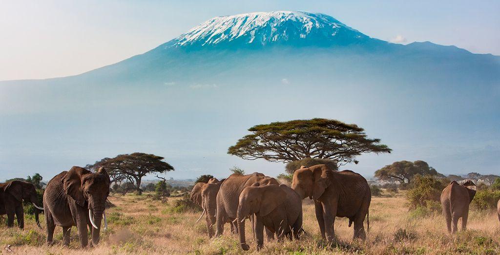 Sehen Sie beeindruckende Elefantenherden von der Nähe