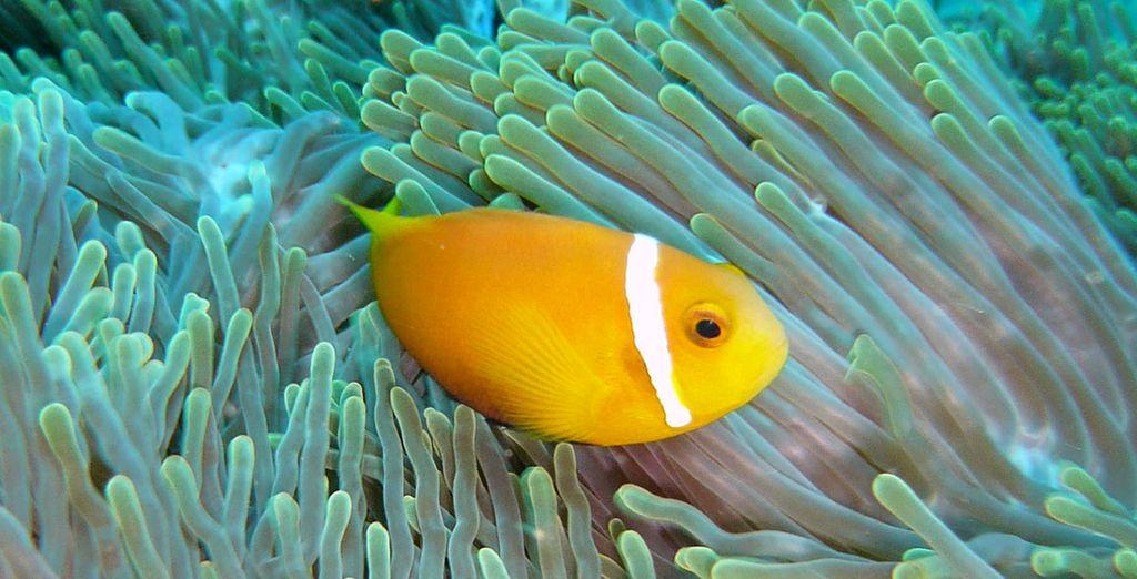 In der farbenfrohen Unterwasserwelt!