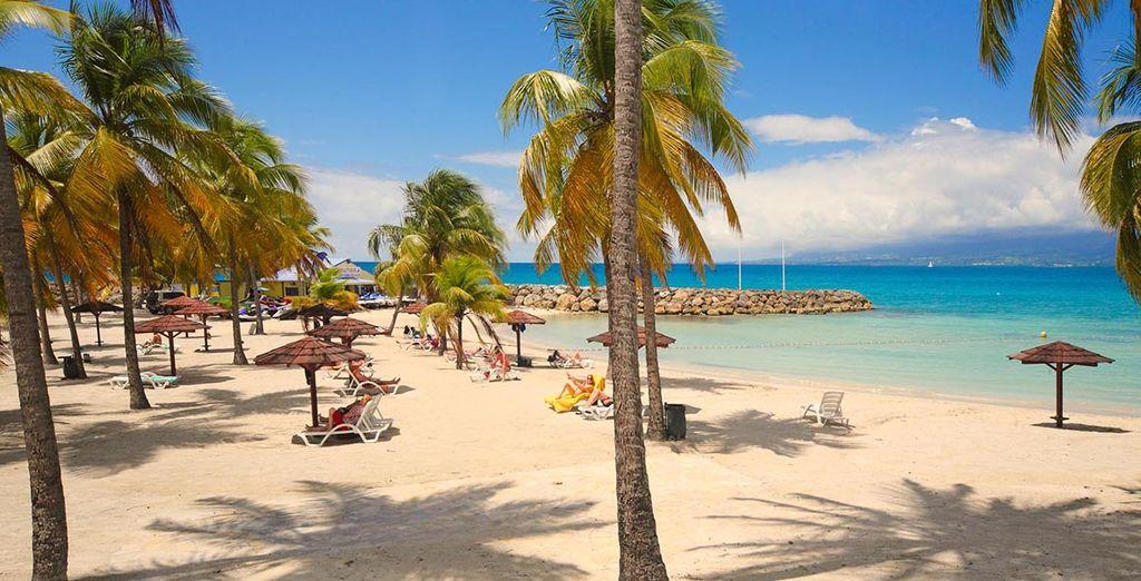 Und erleben Sie einen unvergesslichen Aufenthalt auf Guadeloupe!