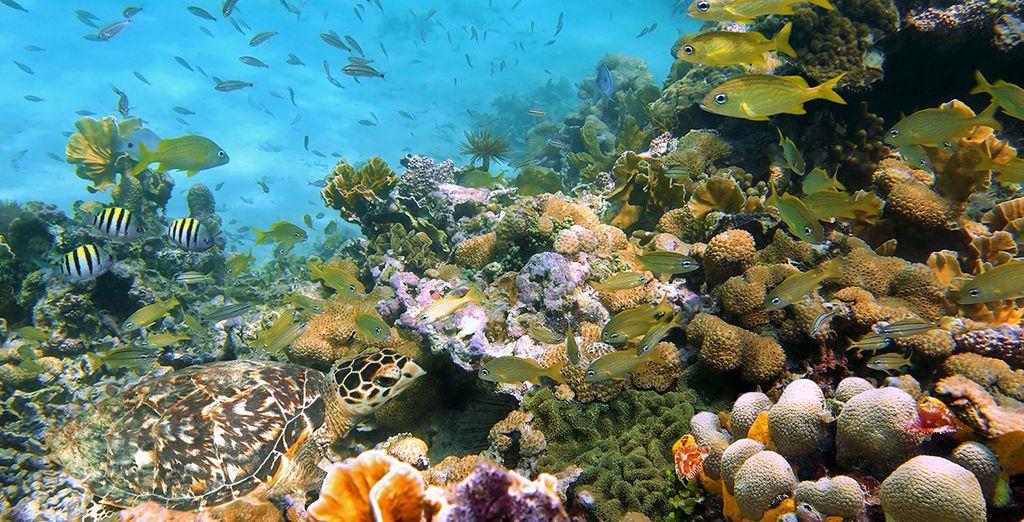 Erkunden Sie die Schätze der Meere