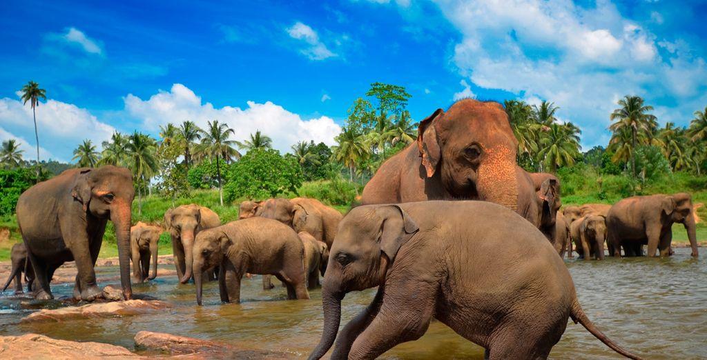 Und des Udawalawe Nationalparks