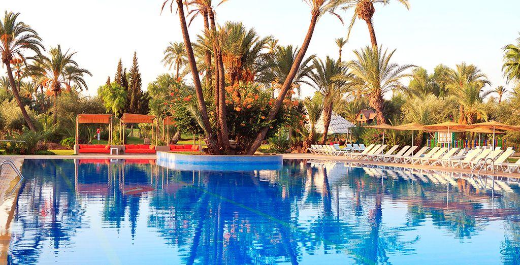 Blaues Wasser und wunderschöne Palmen