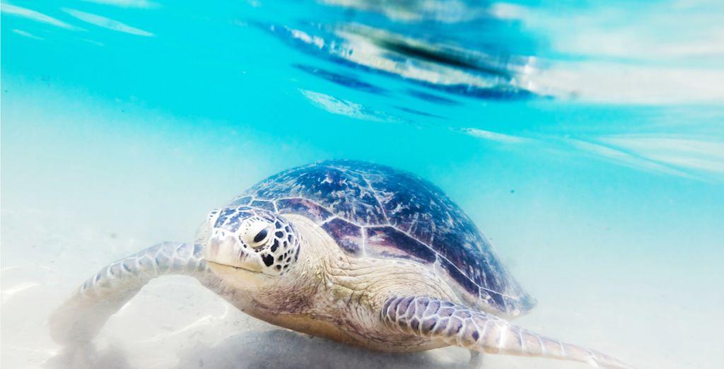 Einem Ort für Unterwasserfreunde