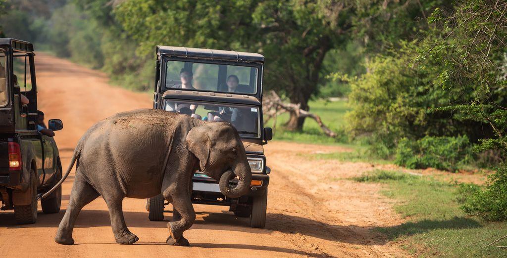 Entdecken Sie den Naturpark in Sri Lanka während einer Jeep Safari