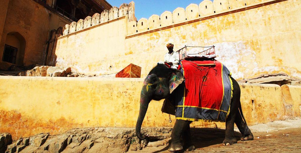 Unternehmen Sie einen Ritt auf dem Rücken eines Elefanten