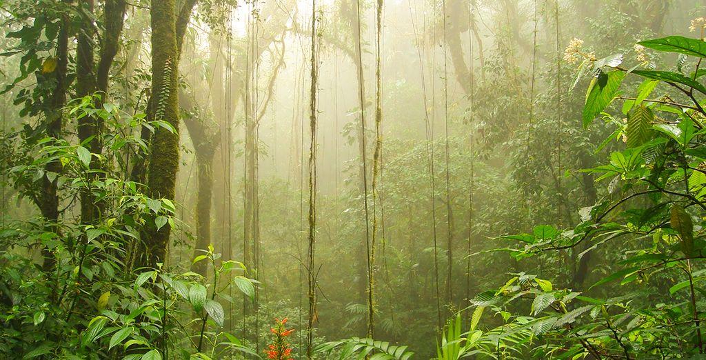 Tauchen Sie ein in die tropischen Wälder