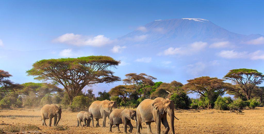 Oder die Magie von Amboseli