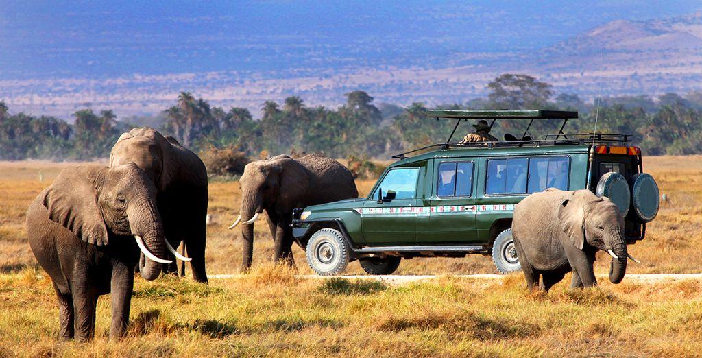 Danach geht es auf eine spannende Safari