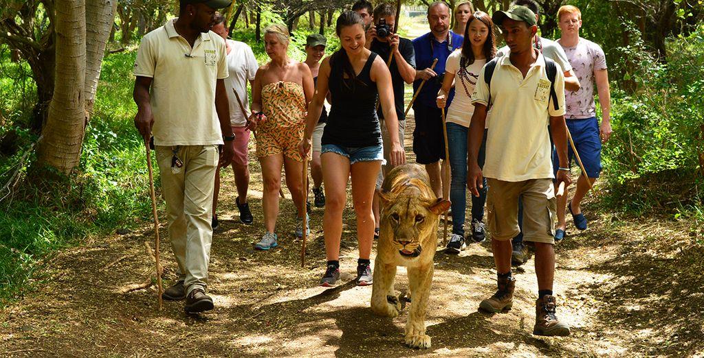 Im Angebot ist ein Eintritt für den Casela World Adventures Park enthalten