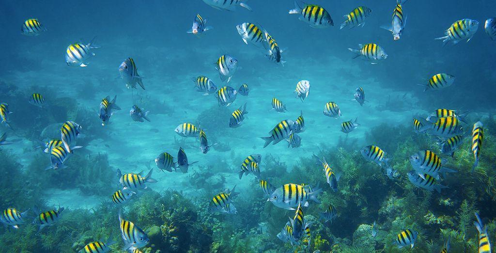 Der Meeresboden von Curaçao