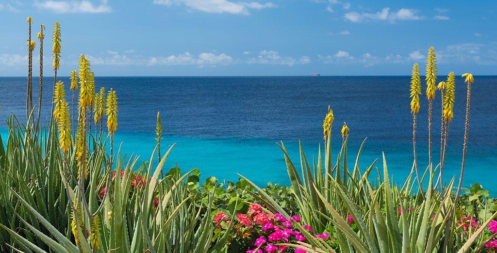 Ein Traumurlaub unter der Sonne Curaçaos
