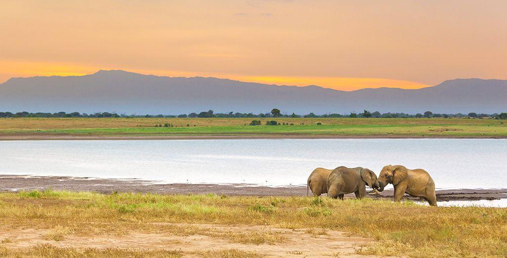 Die wichtigsten Aktivitäten auf dem Reiseweg nach Afrika