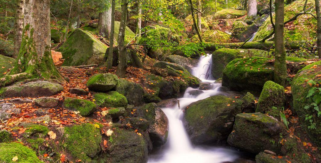 Die besten Wanderungen gibt es im Schwarzwald.