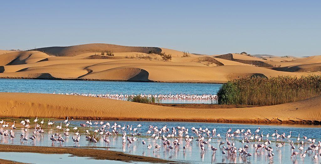 Erkunden Sie Namibia mit seiner noch wilden Fauna und Flora.