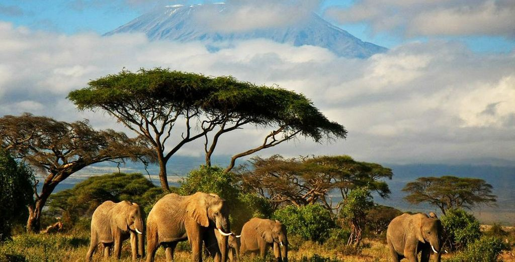Entdecken Sie die afrikanische Fauna und Flora während Ihres Urlaubs in Sansibar
