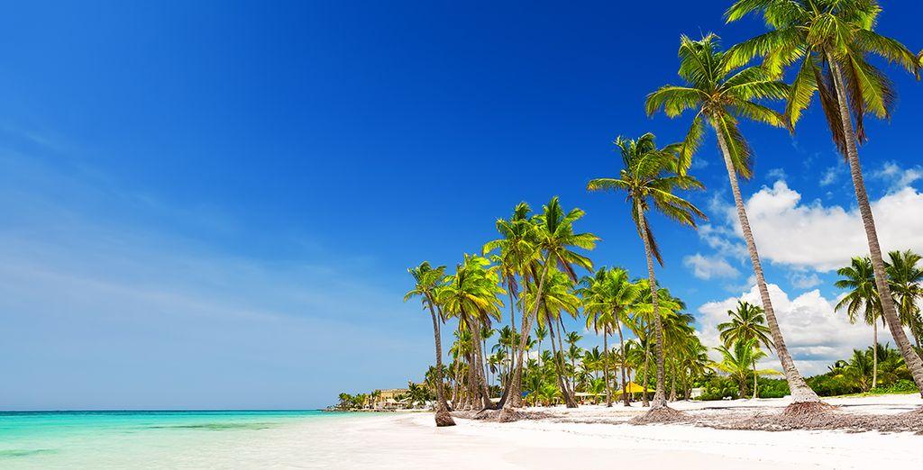 Dirígete a Punta Cana