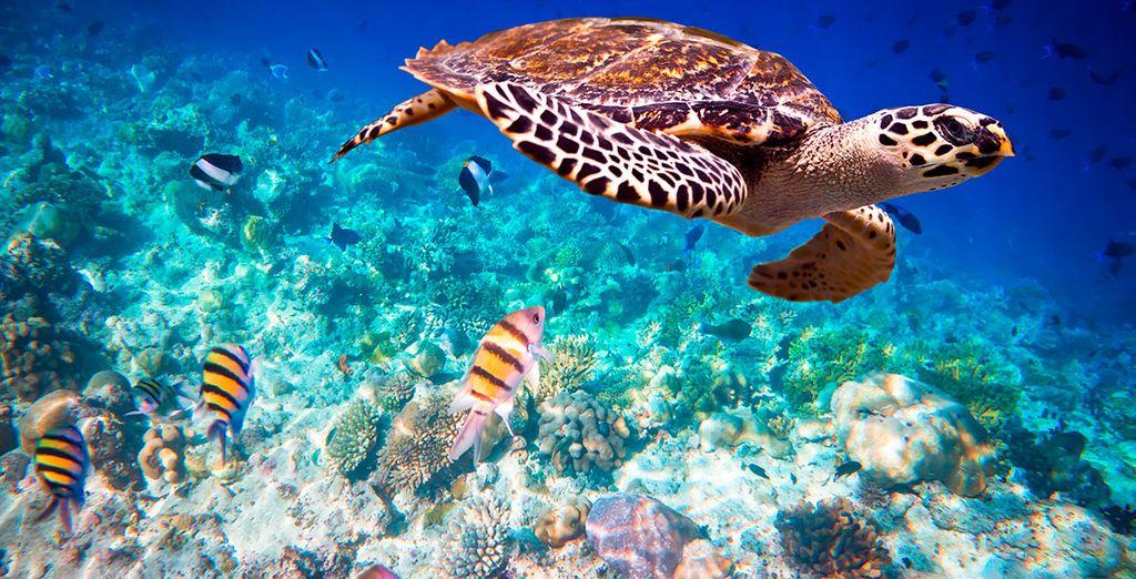 Fauna y flora únicas en todo el planeta residen en sus aguas
