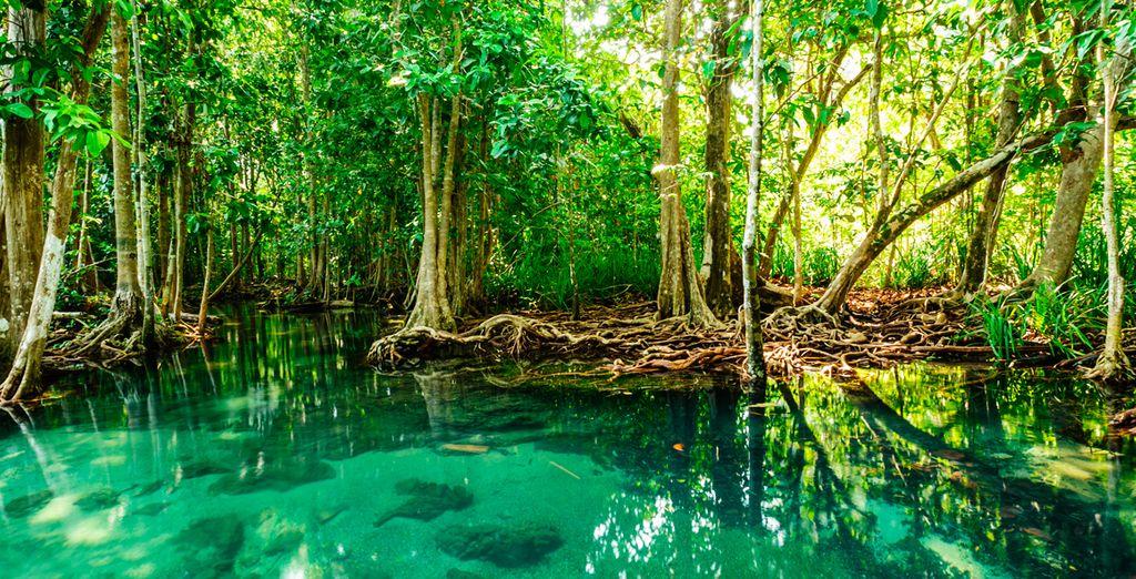 En Krabi enocntrará la naturaleza en estado puro