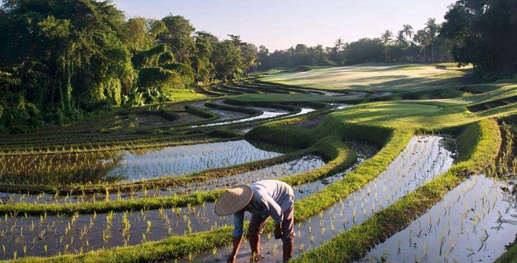 Bali le fascinará