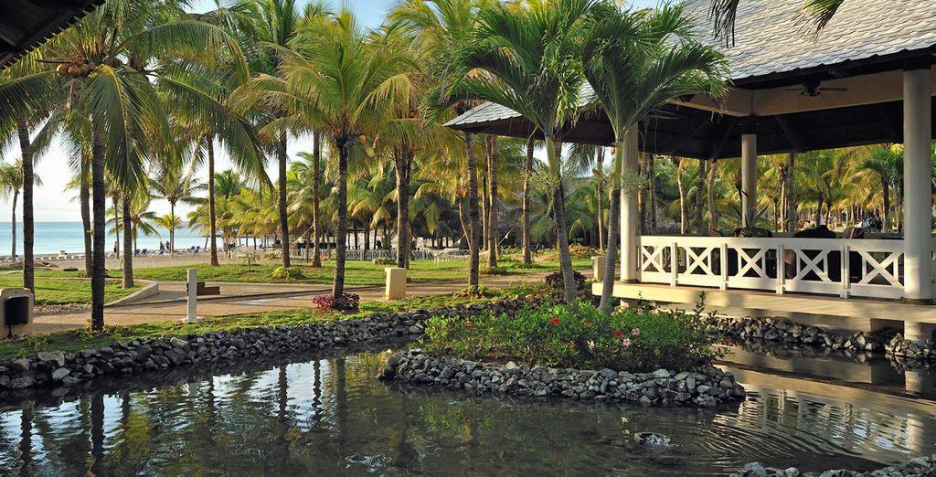 El paraíso a la sombra de las palmeras