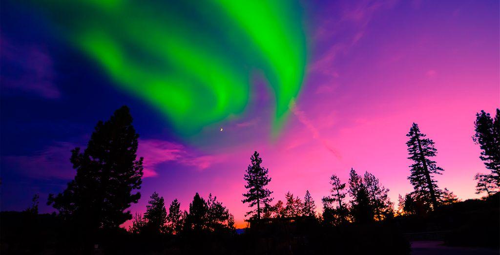 Podrá contemplar uno de los fenómenos naturales más impresionantes