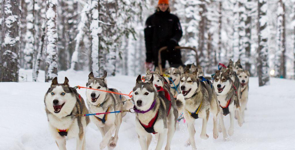 Disfrutará de un paseo en trineo con huskies