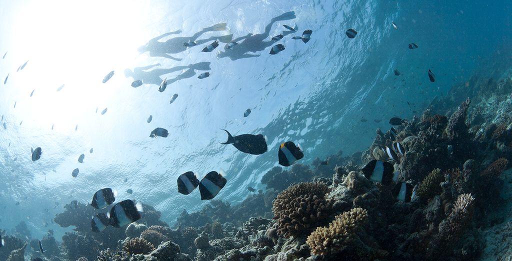 Practique el submarinismo en la zona