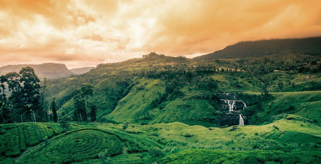 Un combinado con lo mejor de Sri Lanka