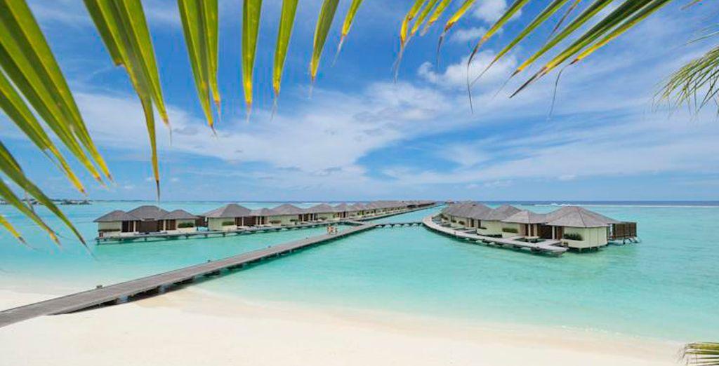 Bienvenido hotel Paradise Island Resort 5*
