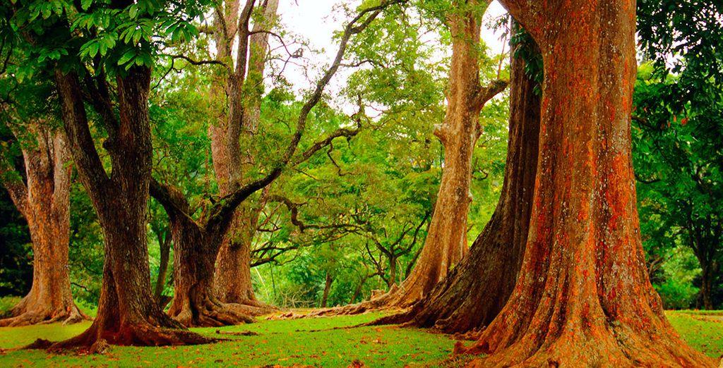 Royal Botanical Garde, en Peradeniya