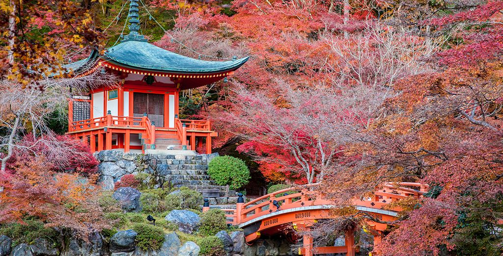 Continuará su viaje hacia Kioto