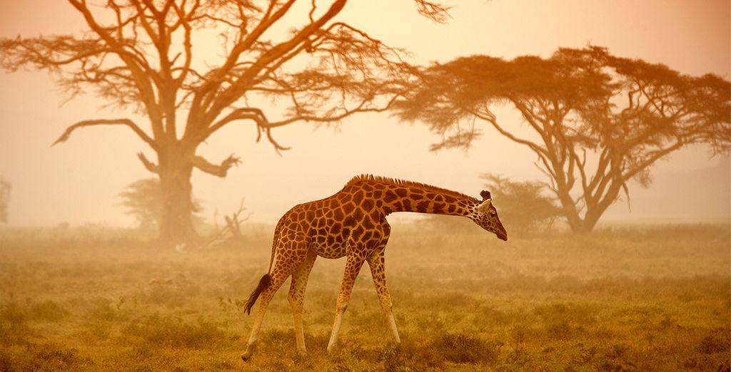 Una estancia inolvidable en Kenia
