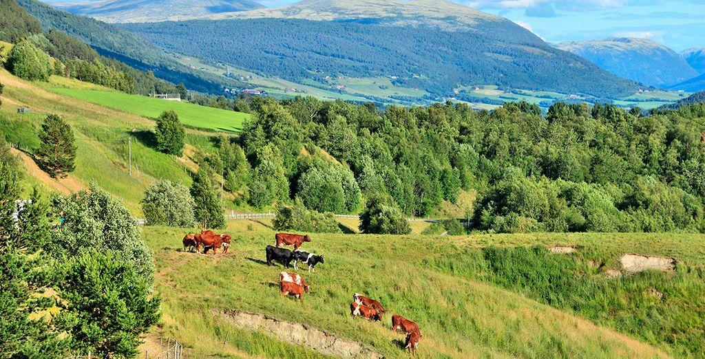 Las bellas praderas de la región de Oppland, llenas de vida, alegría y colorido
