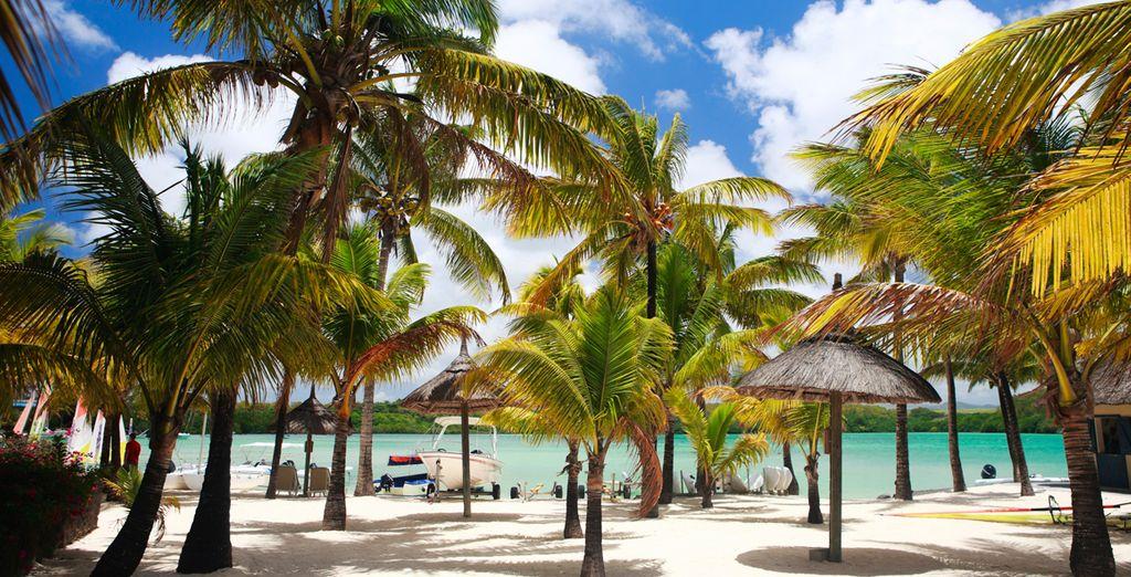 Palmeras y playas de arena blanca con agua cristalina te esperan ¿Nos vamos?