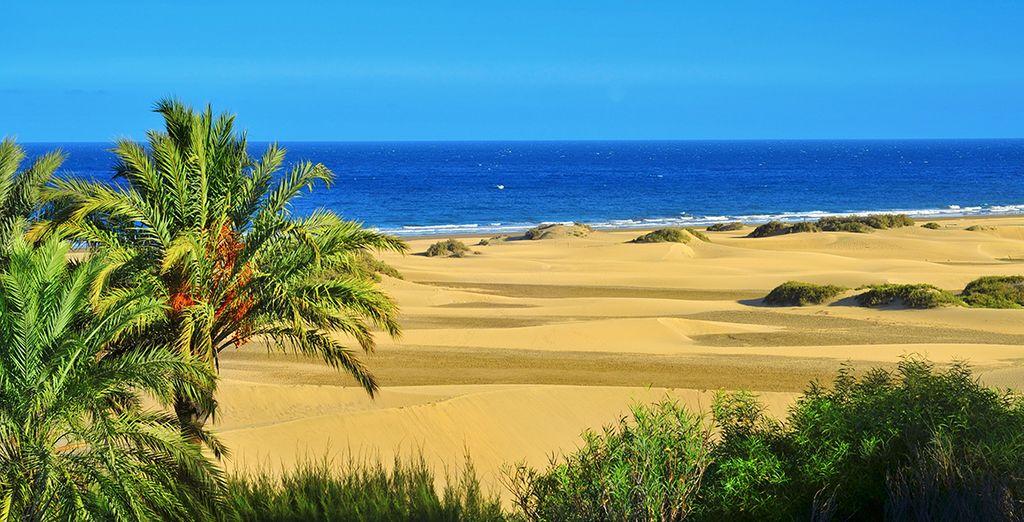 Pon rumbo a las Canarias