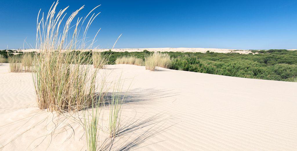 Aprovecha la proximidad con el Parque Nacional de Doñana...