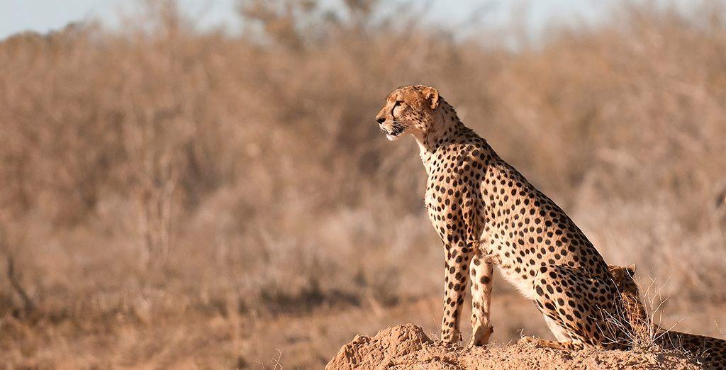 También podrás descubrir la esencia de África con un safari por Shimba Hills