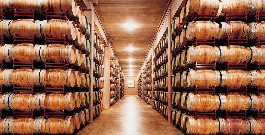 Un viaje que te llevará al fascinante mundo de la cultura vinícola
