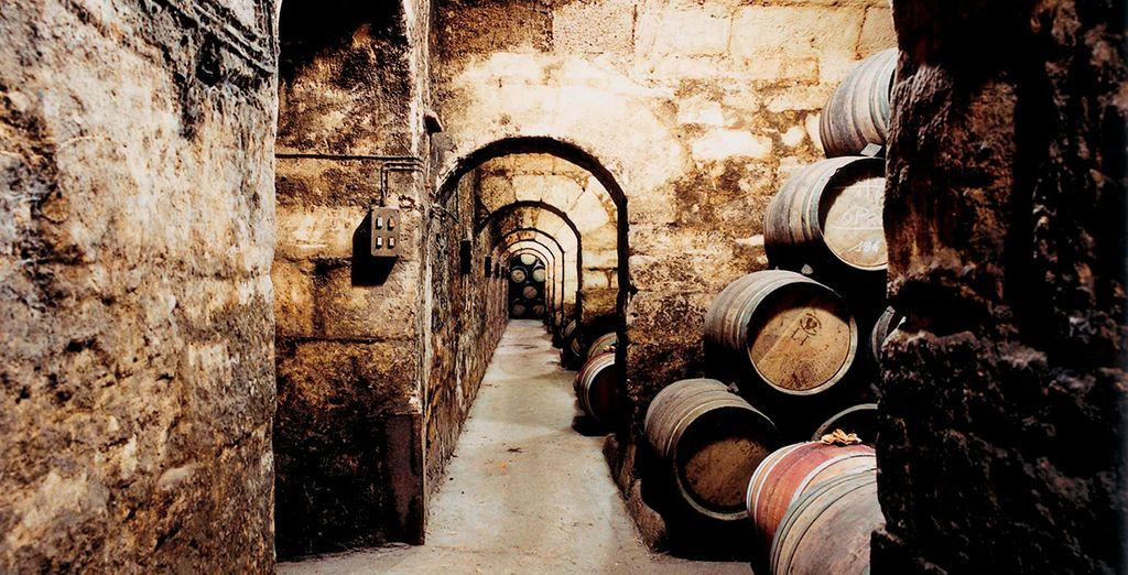 Descubre los secretos de su excelente vino