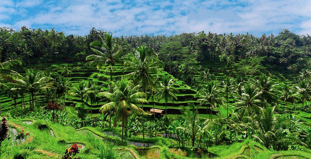 La primera parte de tus vacaciones la pasarás en Bali, la Isla de los Dioses