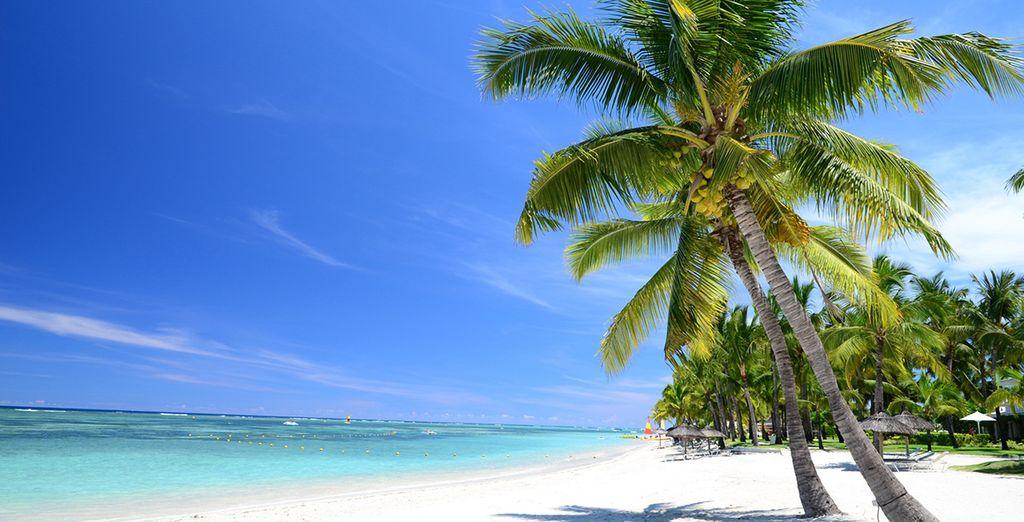 Túmbate bajo el sol de Mauricio