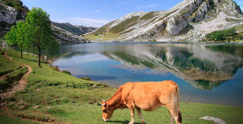 Asturias es naturaleza en estado puro